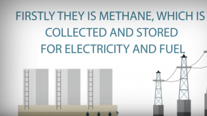 methan is collected and stored and it is used for producing electricity