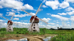 Windmills in Holand used to gring wheat and corn to pump water and to cut wood